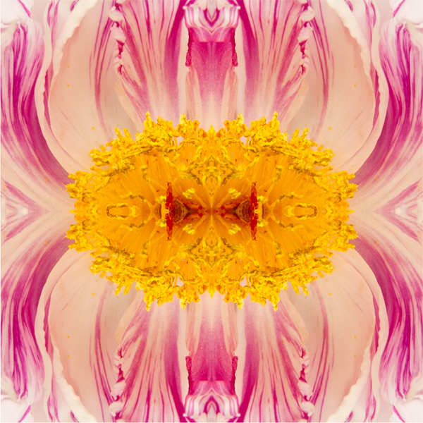 Graphic Blossom l