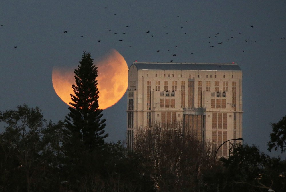 """Birds take flight as the very rare Super Blue Blood Moon sets behind the Orange County Courthouse in #Orlando this morning."" Photo Courtesy of Red Huber (Twitter)."