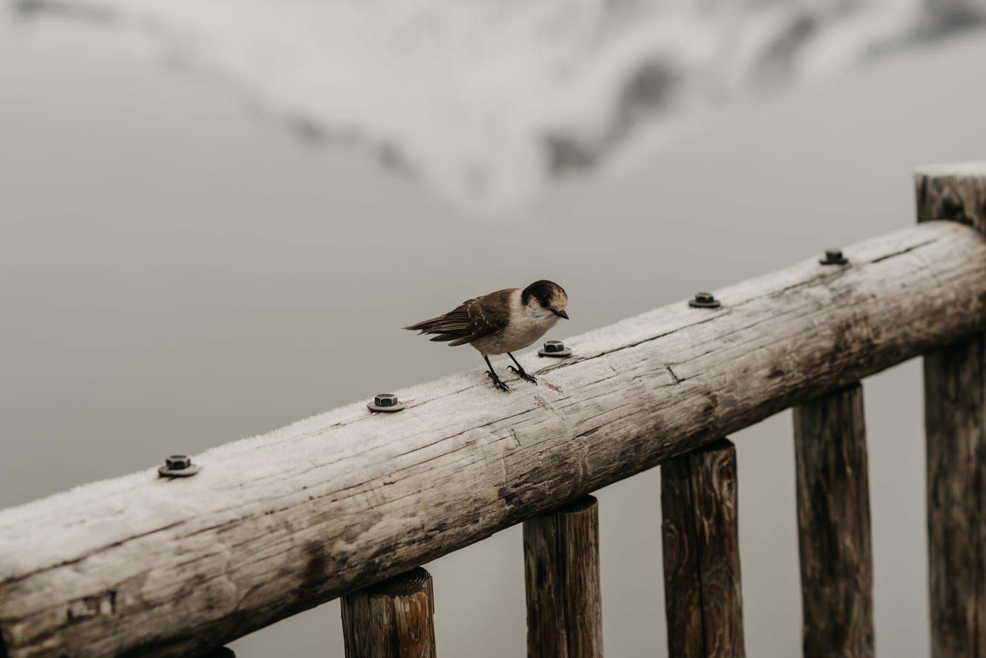 lake-trillium-mt-hood-engagement-session-bird-snow-8720.jpg