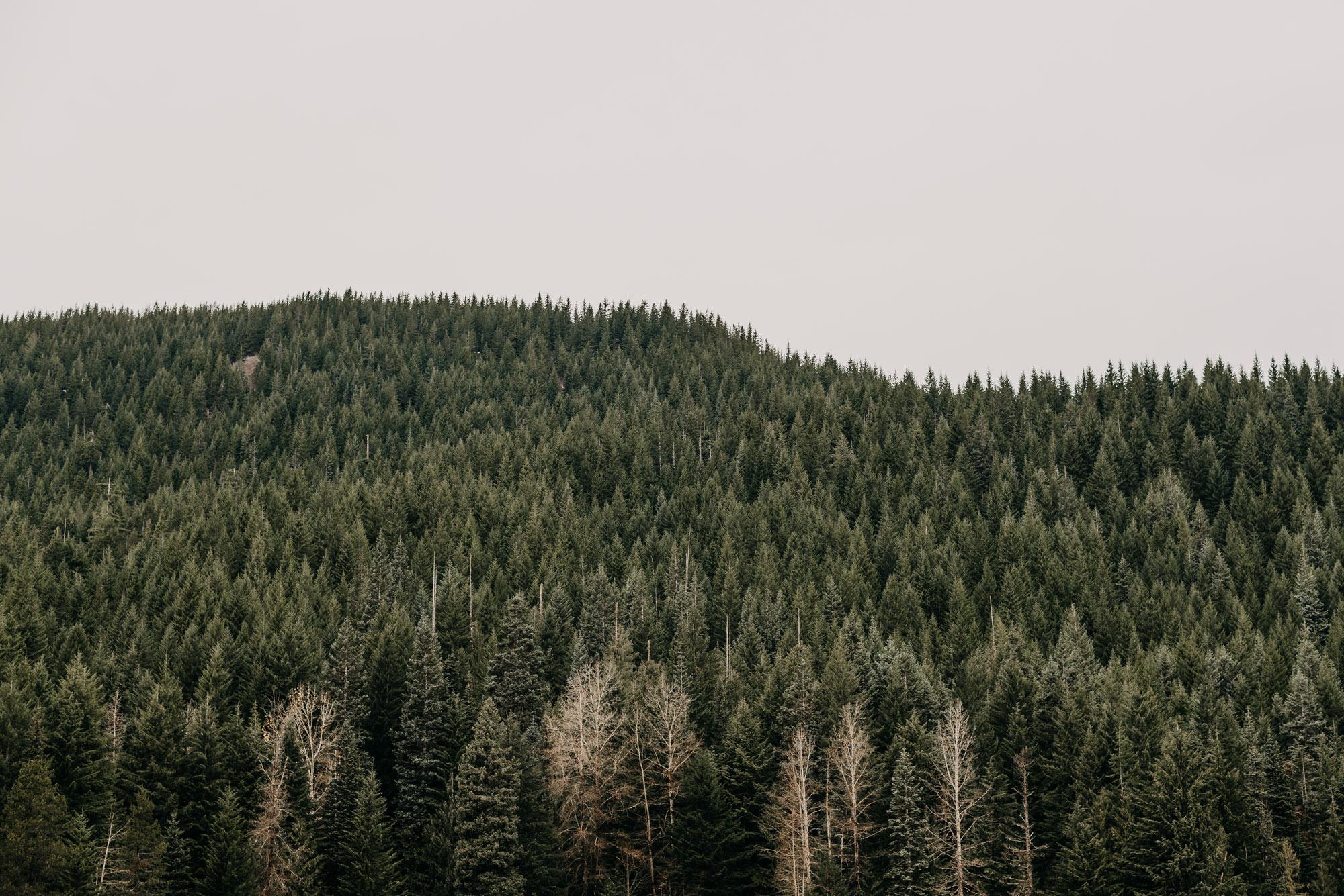 mt-hood-lake-trillium-engagement-session-woods-8545.jpg