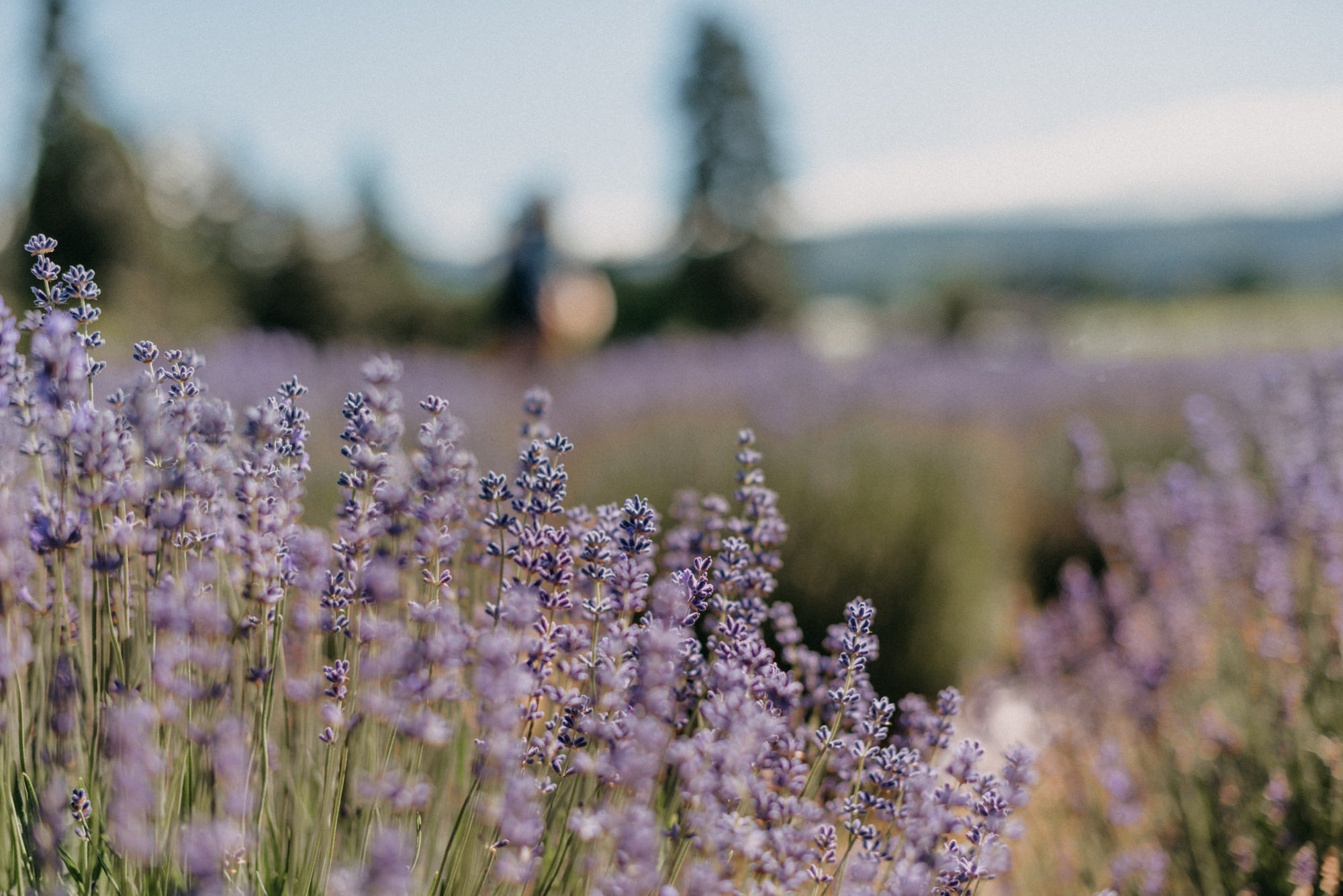 11-Mt-hood-lavender-farms-engagment-couple-summer-7197.jpg