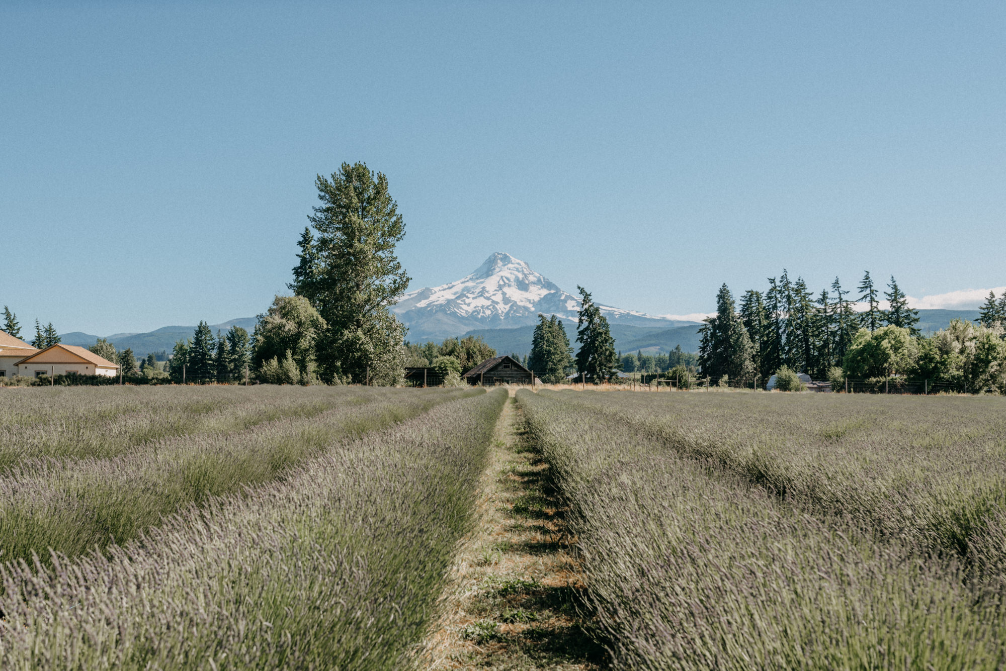 34-Mt-hood-lavender-farms-engagment-couple-summer-7912.jpg