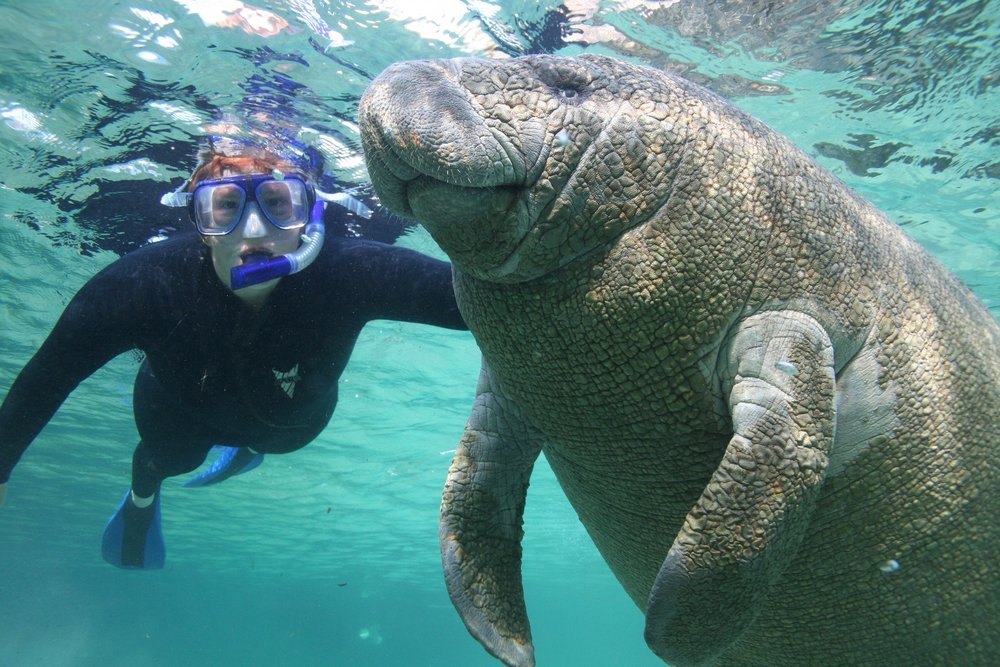 manatee-and-man-at-play1.jpg