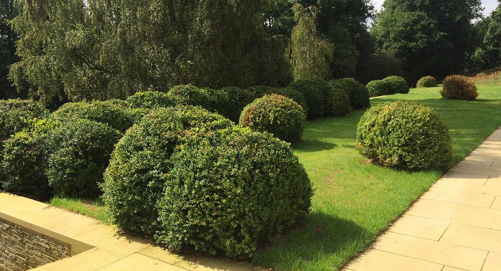 Surrey garden H.jpg