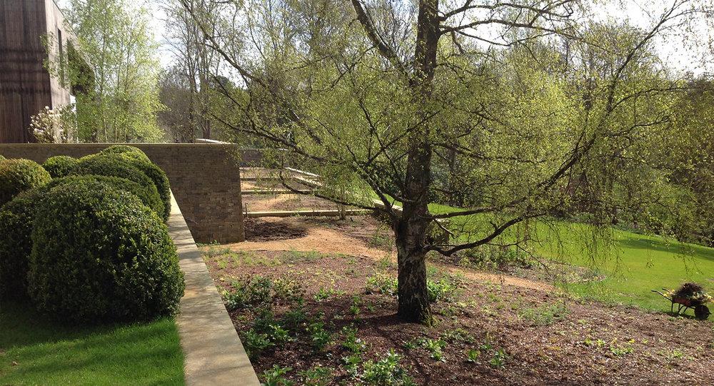 Surrey garden O.jpg