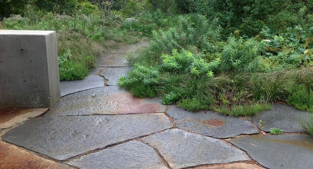 Massachusetts garden zz.jpg