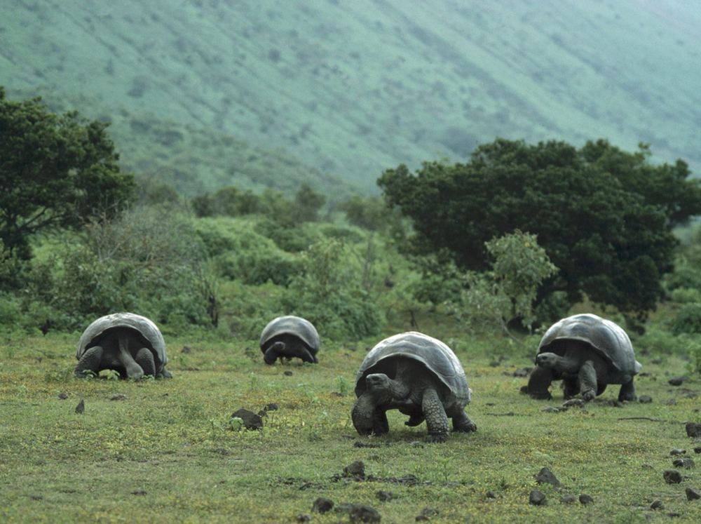 Galapagos Islands - Sail through the Galapagos Islands and witness the wonder of life chronicled by Charles Darwin in his groundbreaking book, The Origin of Species.