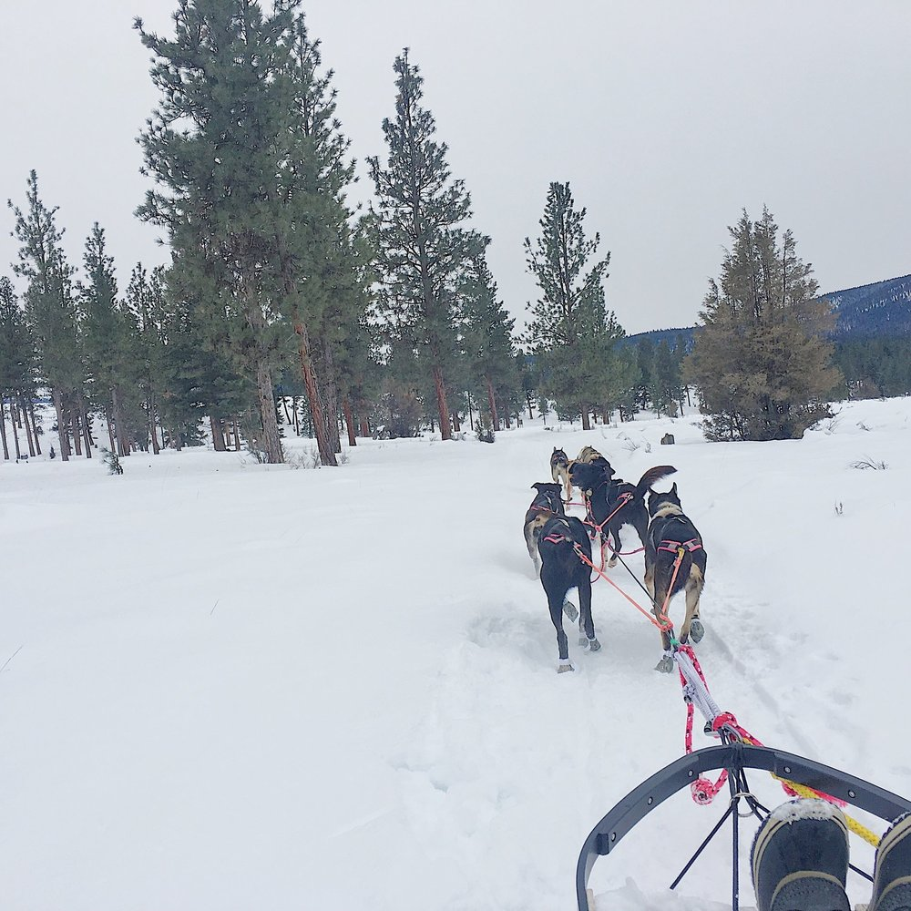 Dogsledding through the snow.