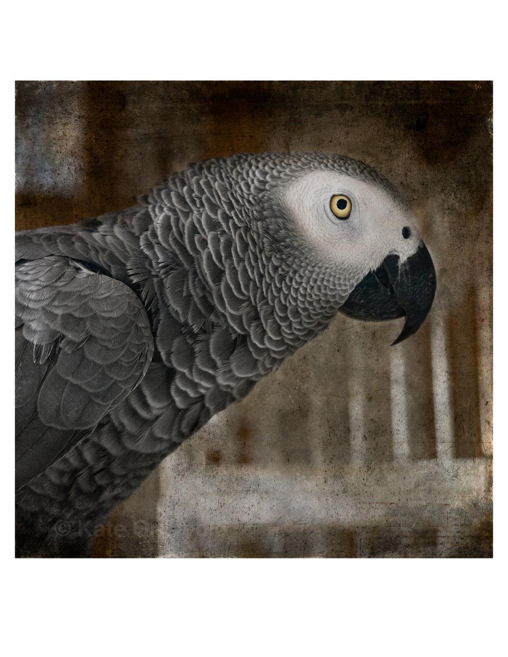 ColorBirds-08.jpg