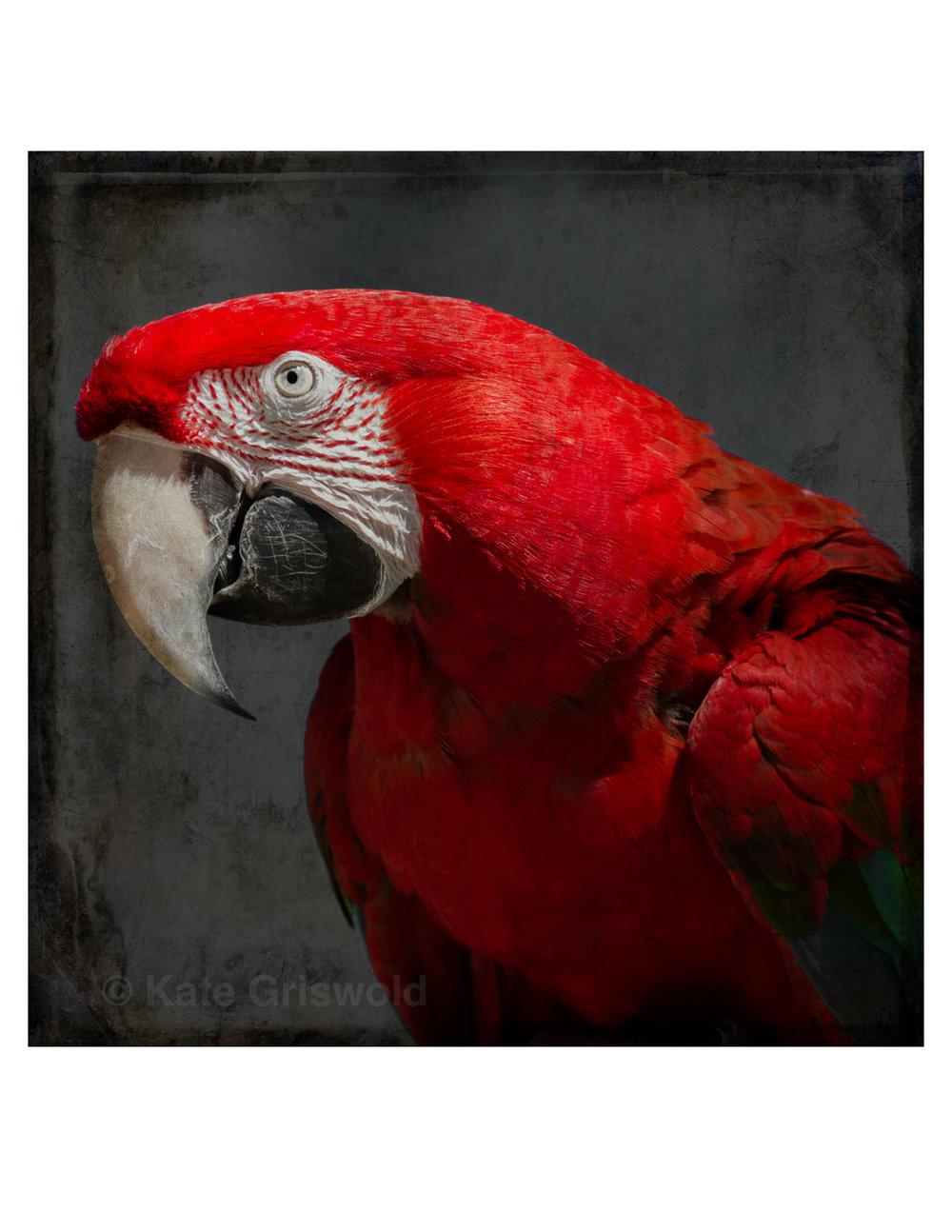 ColorBirds-09.jpg