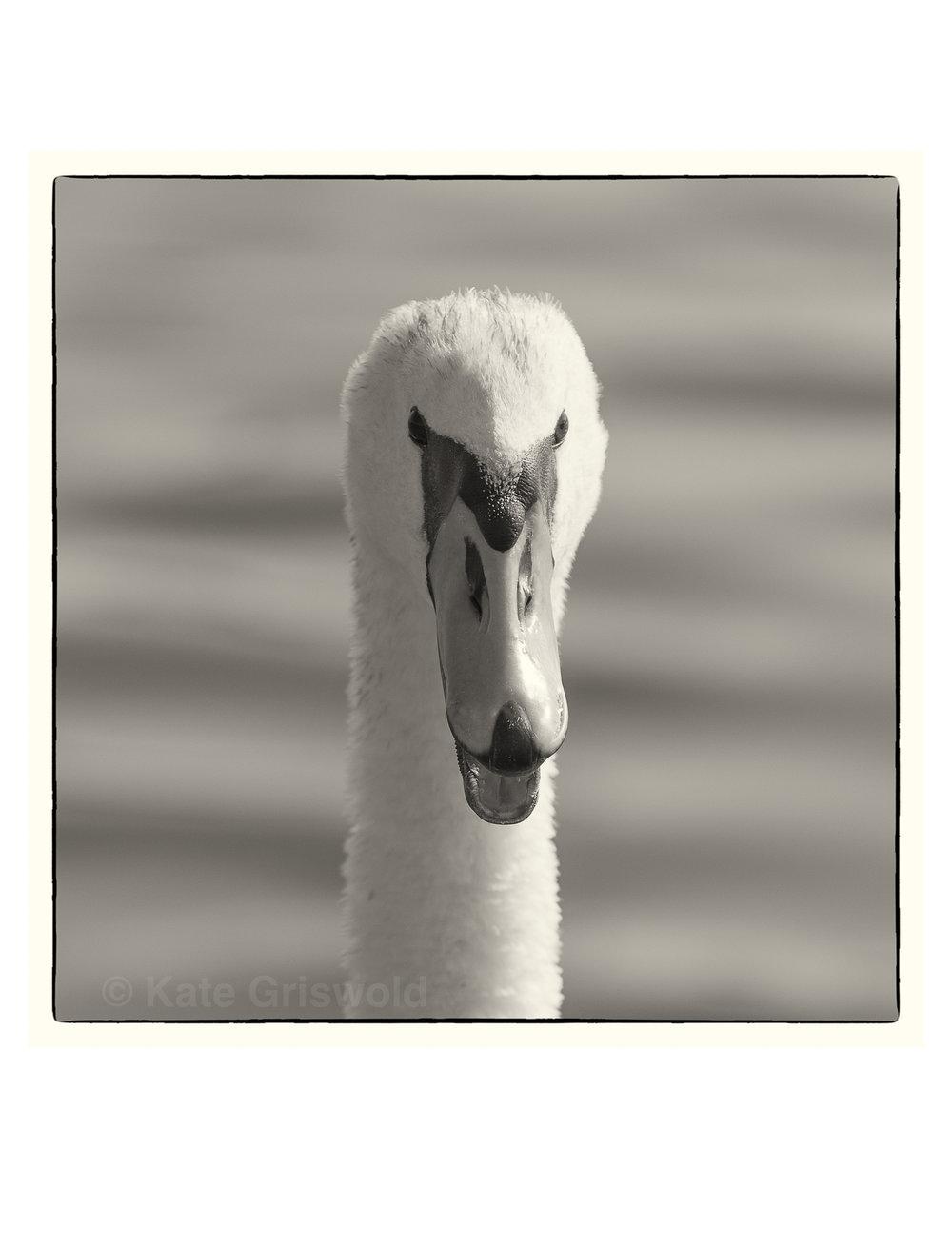 Black&White-03.jpg