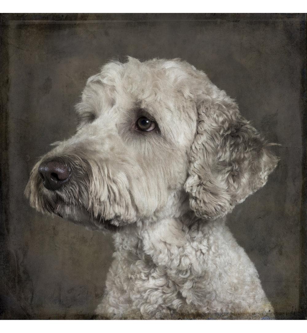 dog (6 of 6).jpg