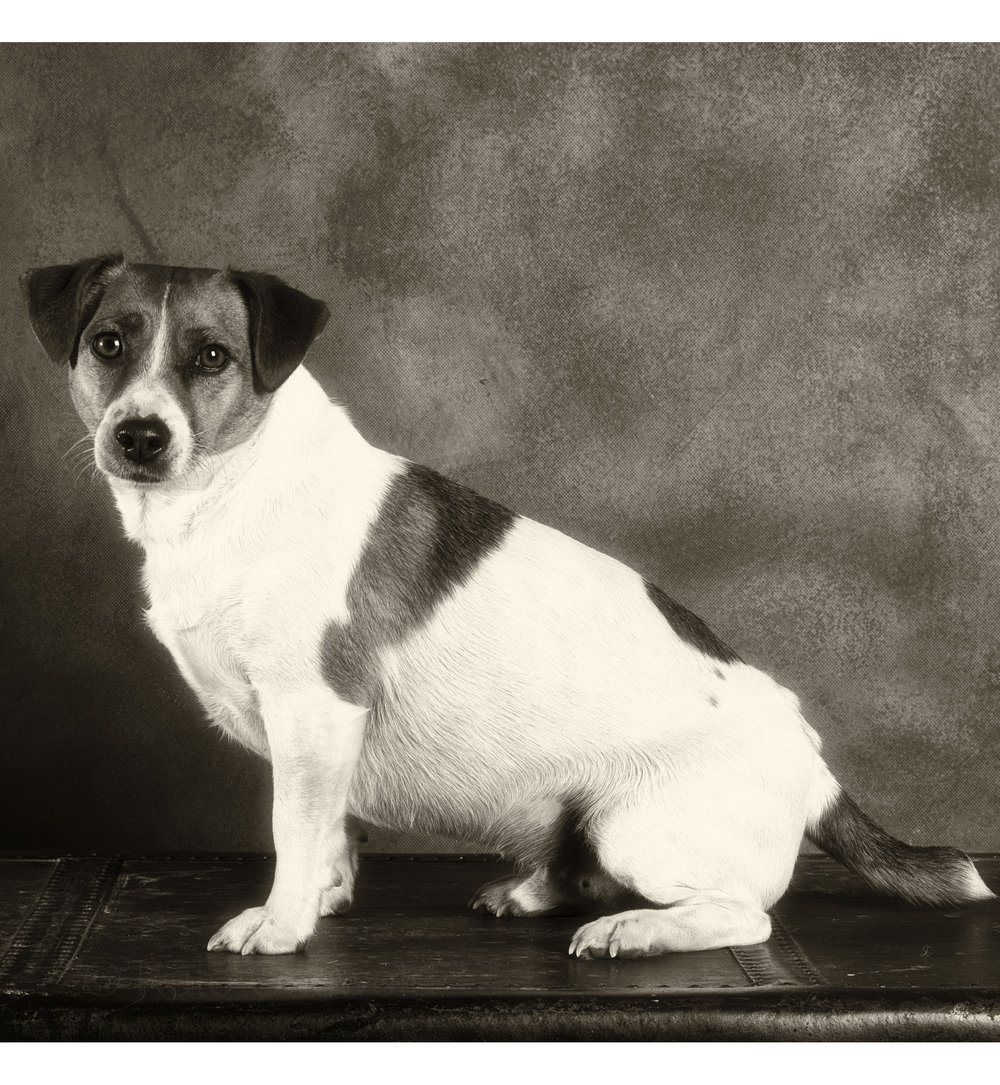 dog (5 of 6).jpg