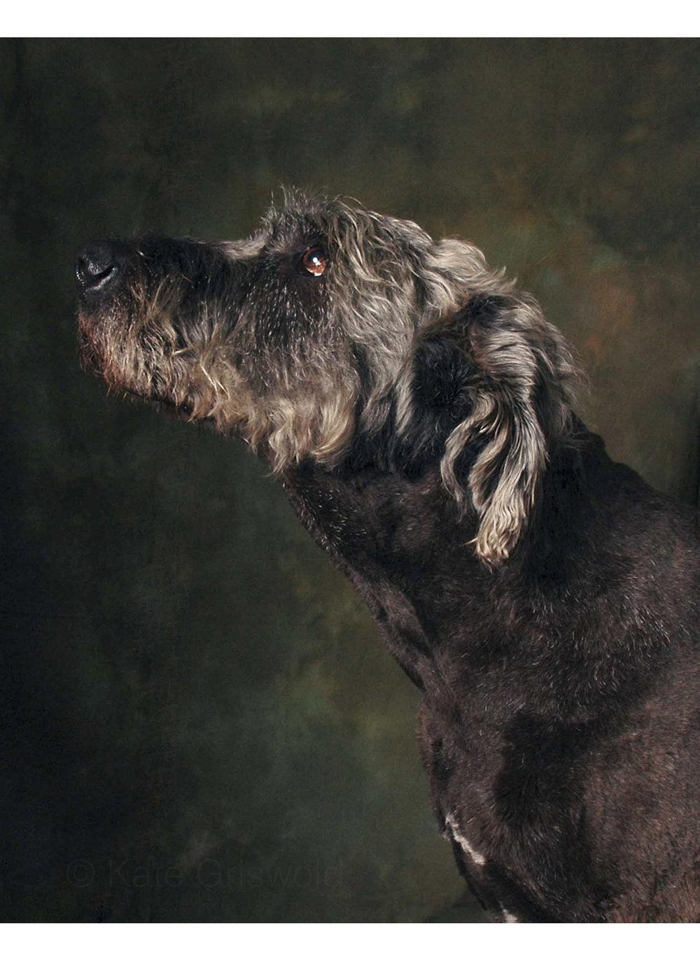 dog (2 of 6).jpg