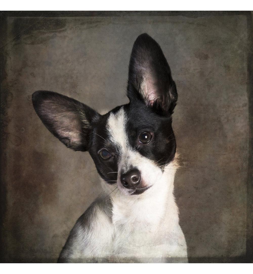 dog (4 of 6).jpg