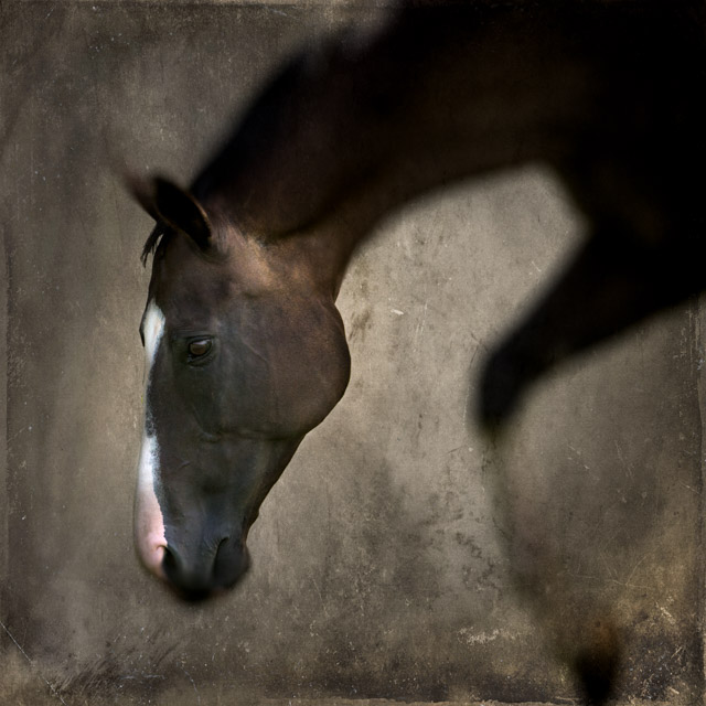 L'ame du cheval 24x24 photograph  © Kate Griswold All Rights Reserved