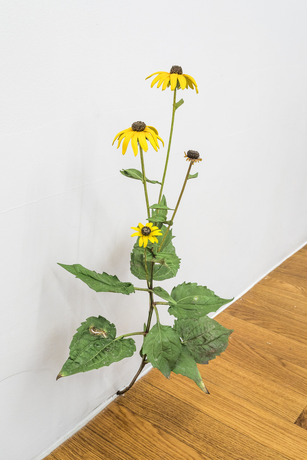 Tony Matelli  Weed #431  2018 Painted bronze 23 1/4 x 13 x 9 inches