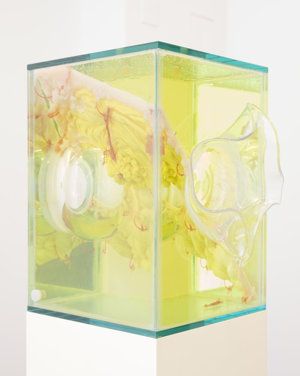Jennifer Sirey  Swiile  2019 Glass, bacteria, vinegar, water, monofilament, wax, food coloring, MDF, and paint 62 1/2 x 11 x 11 1/2 inches