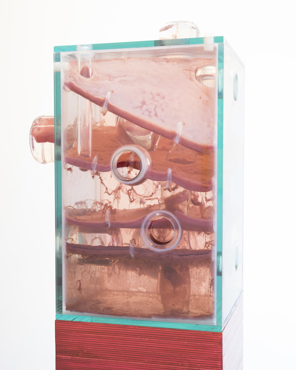 Jennifer Sirey  Mongk  2019 Glass, bacteria, vinegar, water, monofilament, plywood, paint, and OSB board 63 x 10 1/2 x 10 1/2 inches