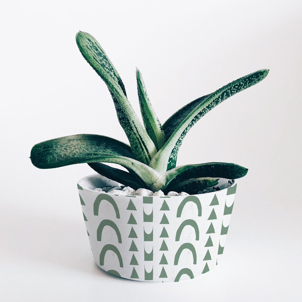 Cactus pot mock up.jpg
