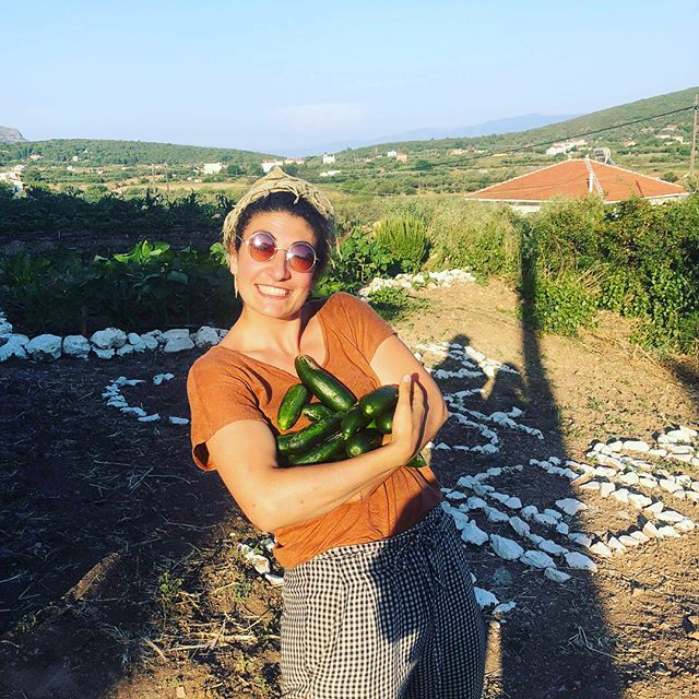 You reap what you sow... and SV has been reaping a lot in our amazing 'Garden of Friendship'! 🌱 ————————— Thanks to an amazing Greek couple who have given us their space to grow fruits and vegetables, and the incredible dedication and love of our volunteers that makes the garden flourish, we are able to regularly give away some much needed vitamins and minerals in the form of lettuce, courgette, tomatoes, and what not, to the people in the camp. 🍅🥒 —————————- #love #garden #growyourown #vegetable #food #people #volunteer #refugee #helprefugees #philantrophy #samosvolunteers #humanity #giveback #nonprofit #community #greece