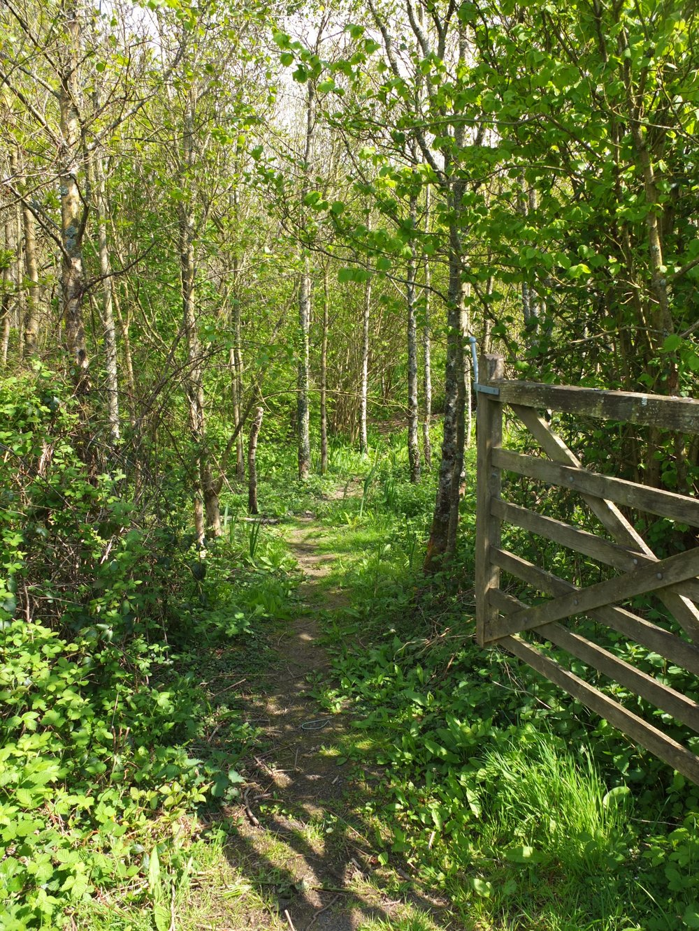 Bôn woodland