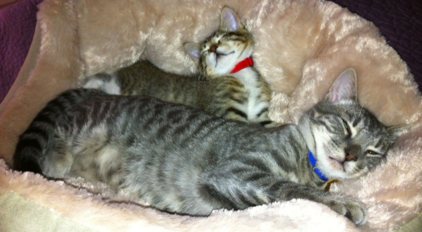 Two cats cuddling in a pet bed
