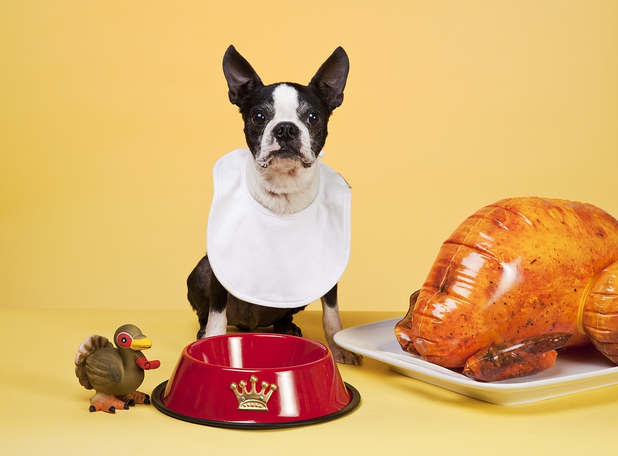bigstock-A-Dogs-Thanksgiving-13800650.jpg