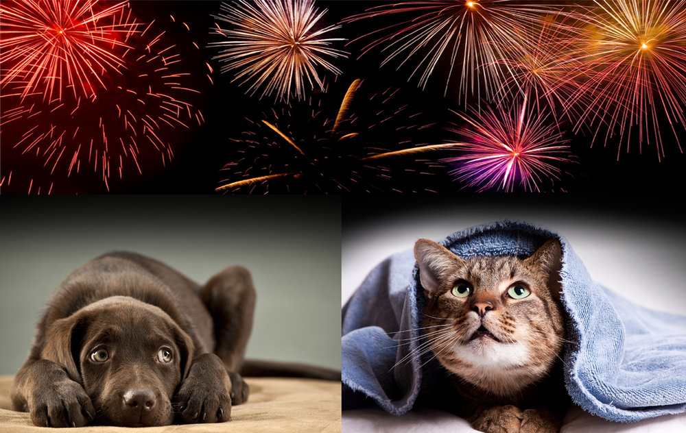 Scared dog and cat looking up at fireworks