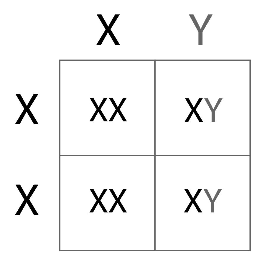 Example Punnett square for sex-linked genes.