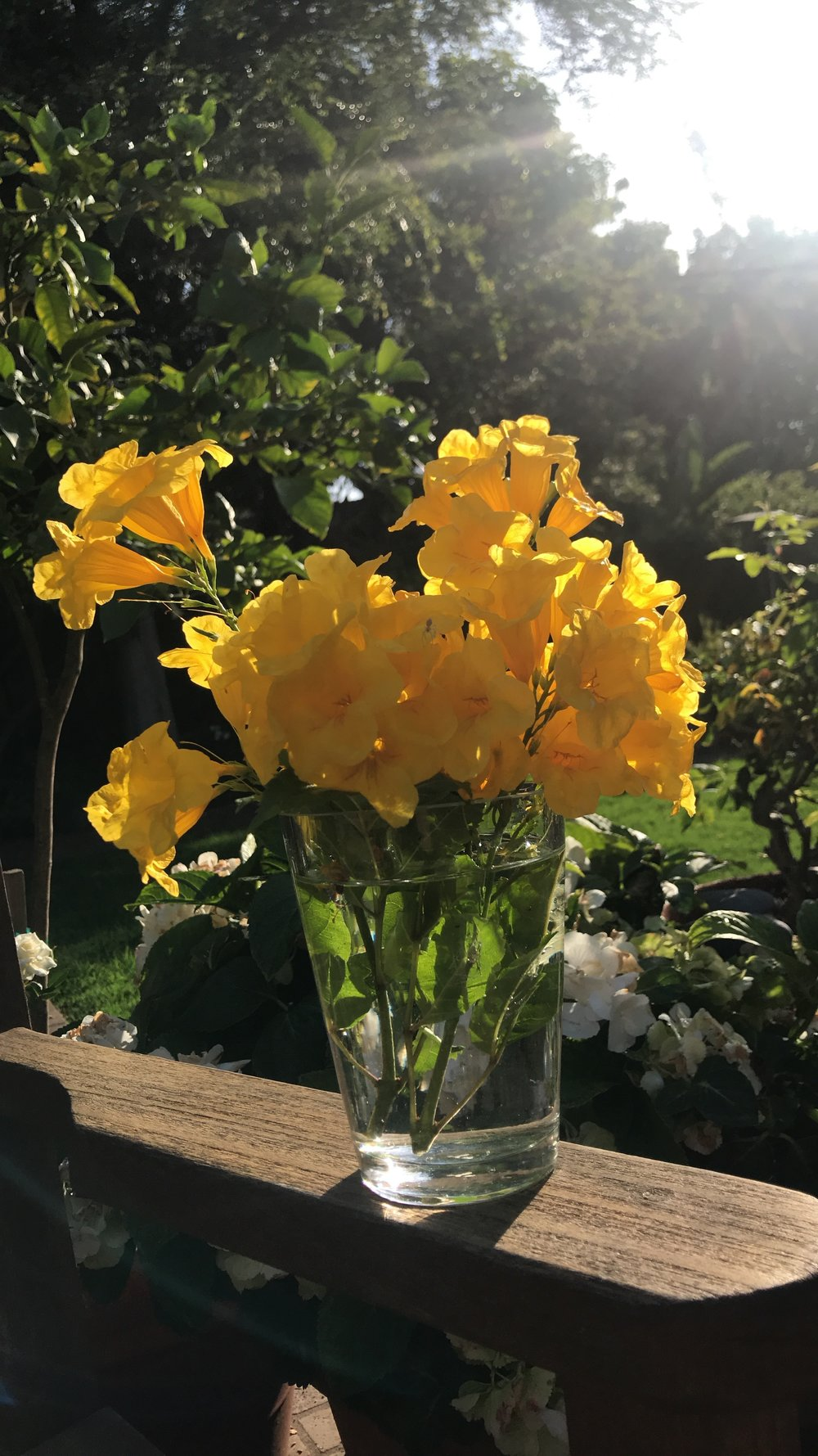 I absolutely love the way the sun shines through flowers in the early evening. My mom cut these yellow flowers to use as a centerpiece for the dinner table and they looked so beautiful. Flowers will never not make me happy.