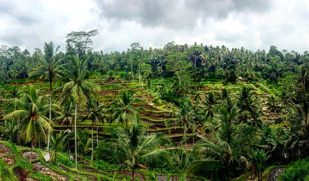 This is where I was before receiving the message from my mom about my Grandma   Ubud, Indonesia