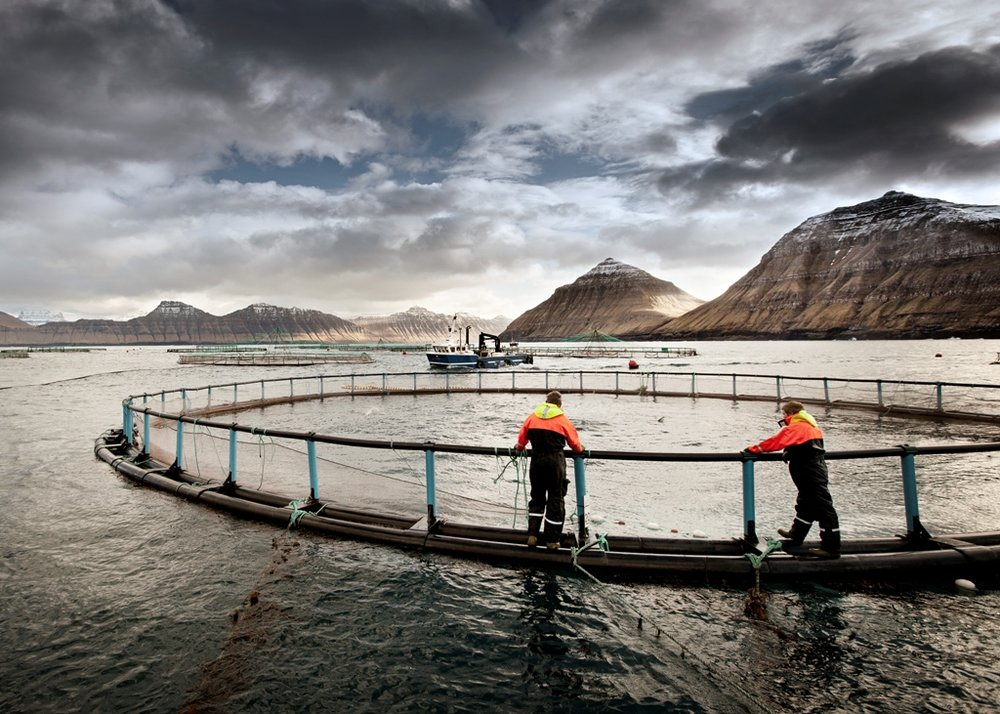 Salmon Farm in Faroe Islands Credit: www.bakkafrost.fo