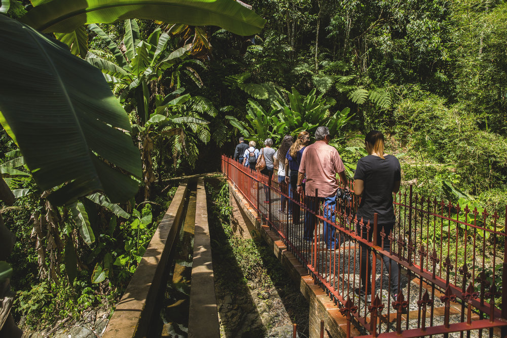 Into the jungle.jpg