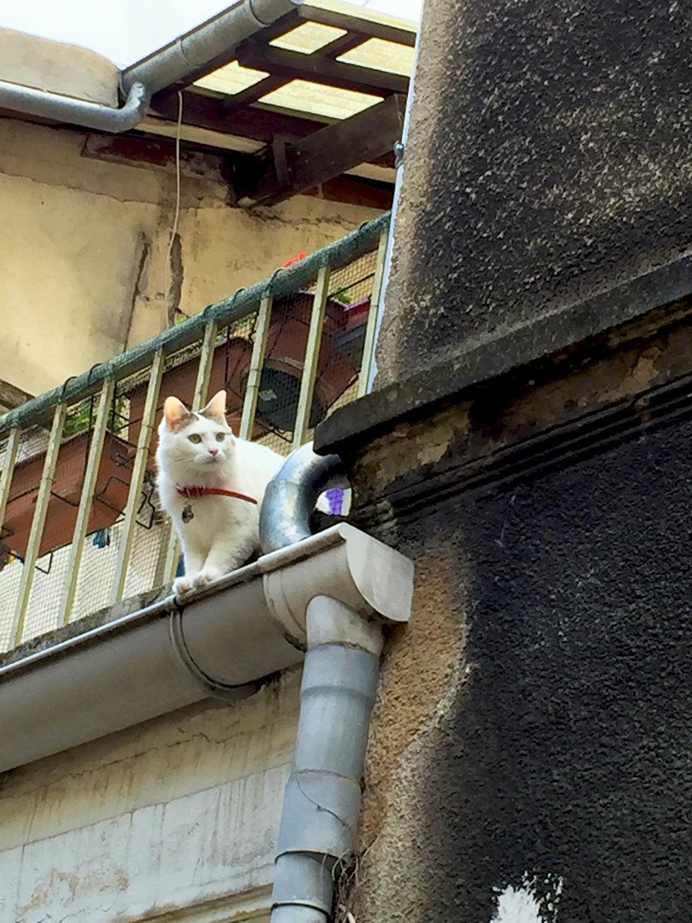 Chat de gouttière? Well, he/she is standing on a rain gutter... Rue des Thermopyles, 14th arrondissement