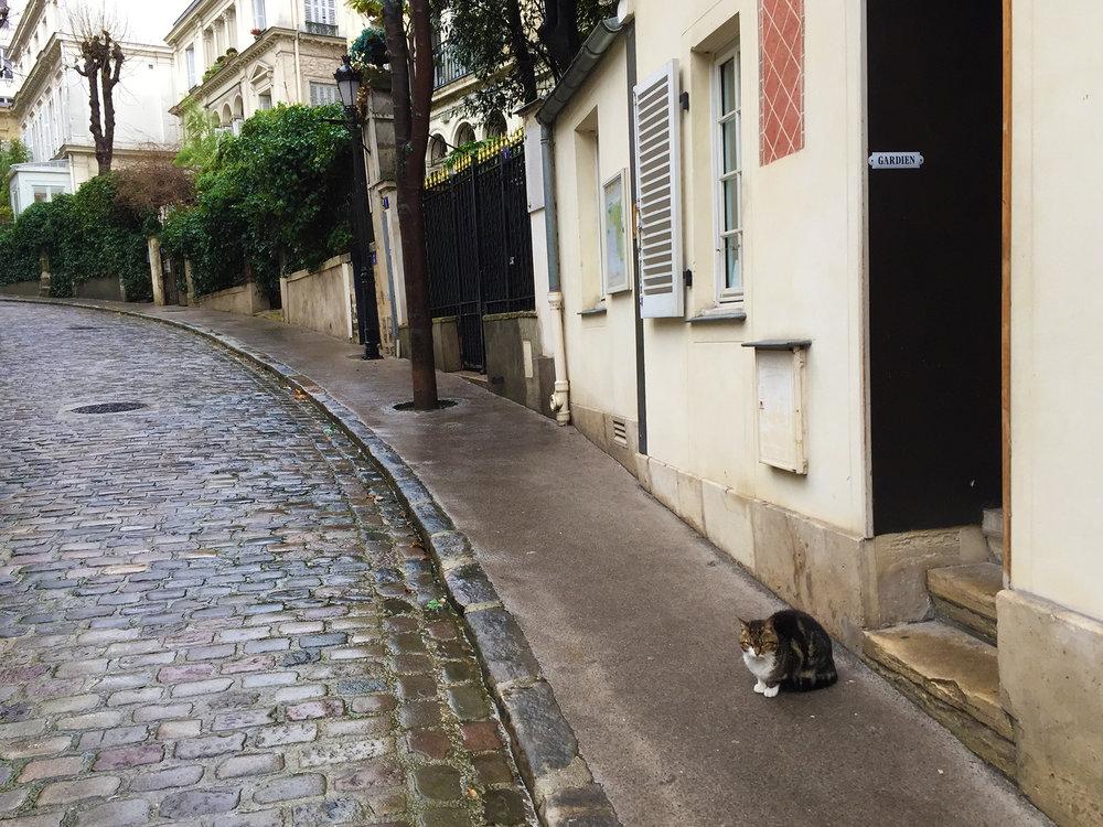Profession: chat de garde. Rue Frochot, 9th arrondissement