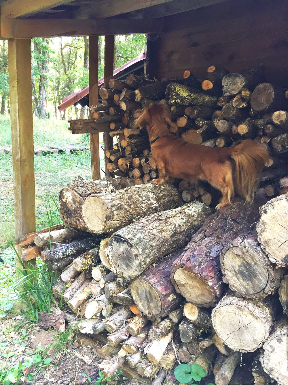I just know there is a mouse hiding between these logs.