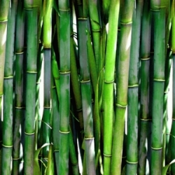 Bamboo Cocktail.jpg
