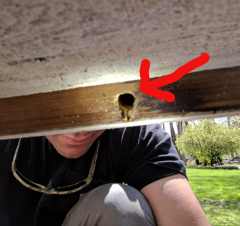 We can seal holes and most gaps where the carpenter bees are living.