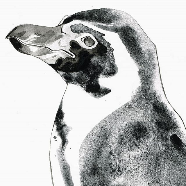 BOGO Original Wildlife Art Sale through my @vango gallery for a limited time. Check my profile link for details. #artforsale #penguin #wildlifeart