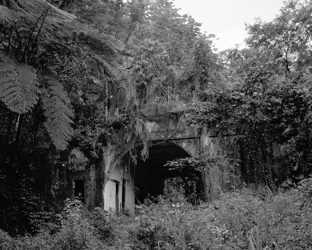 Overgrown Entrance, 2009