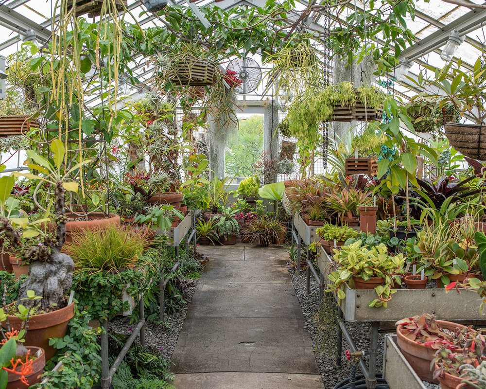 Greenhouse, 2018