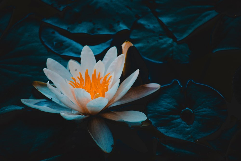 aquatic-aquatic-plant-beautiful-1129382.jpg