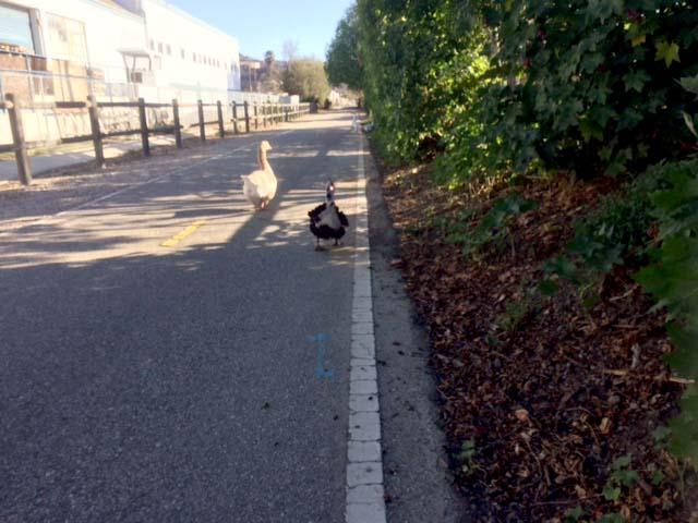 bike trail rvi trail garden buffy and lucky.jpg