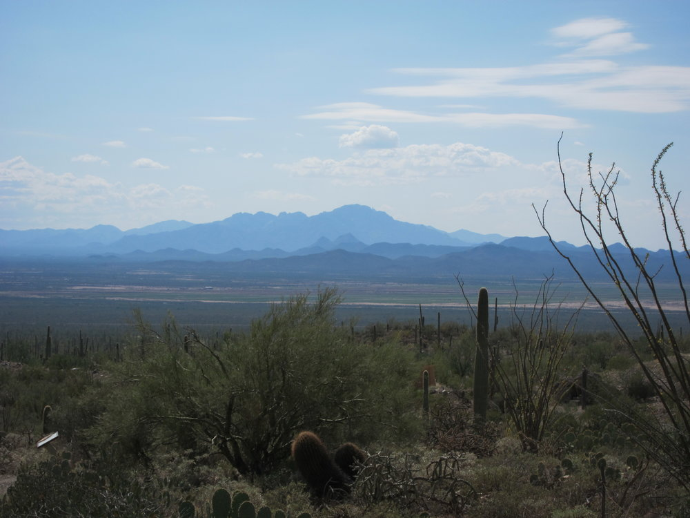 The only physical place that has ever felt like home is the Sonoran Desert. -