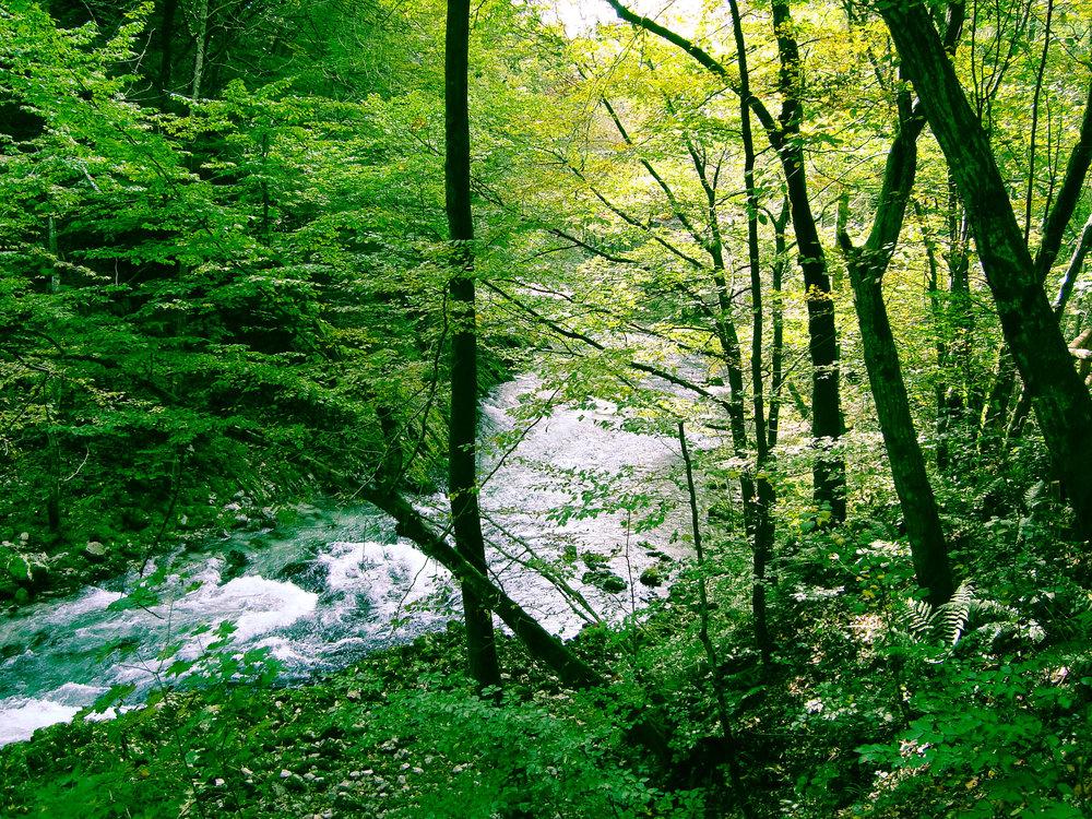 nature heals.jpg