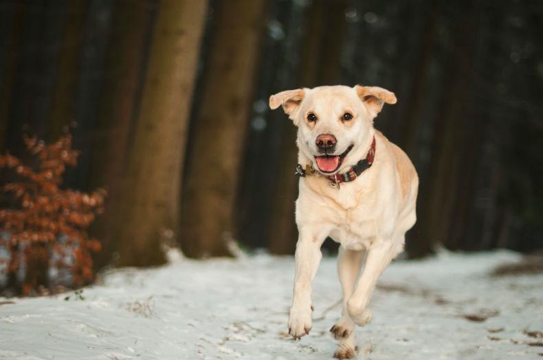 Jinga_Life_adorable-animal-canine-248273_BV.jpg