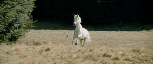 Shadowfax - You are probably a horse.