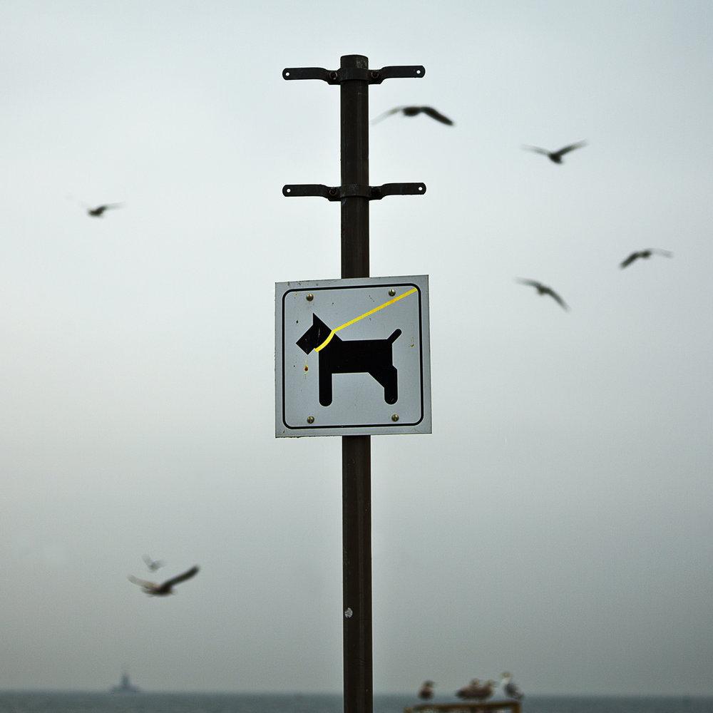 Hund-i-snor_KastrupHavn©FotoBenteJæger.jpg