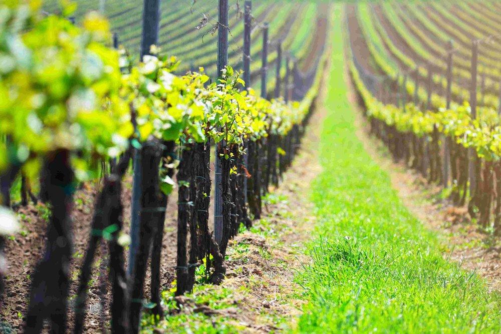 il marketing fa il vino più buono